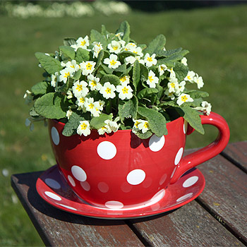 Giant Tea Cup Planter
